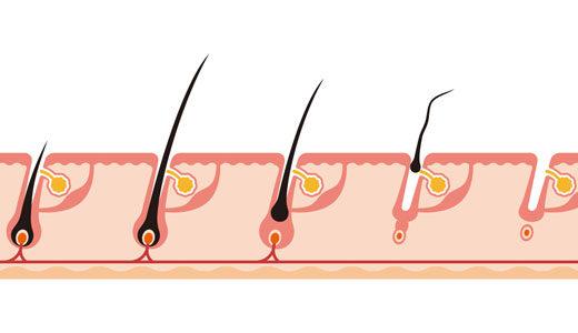 ヘアサイクルの周期「成長期・退行期・休止期」とヘアサイクルの乱れについて解説